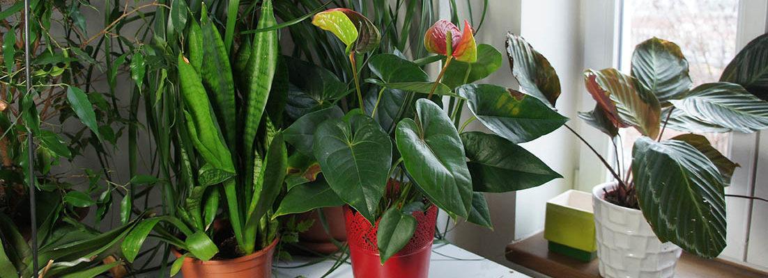 Benefits of Having Indoor Plants