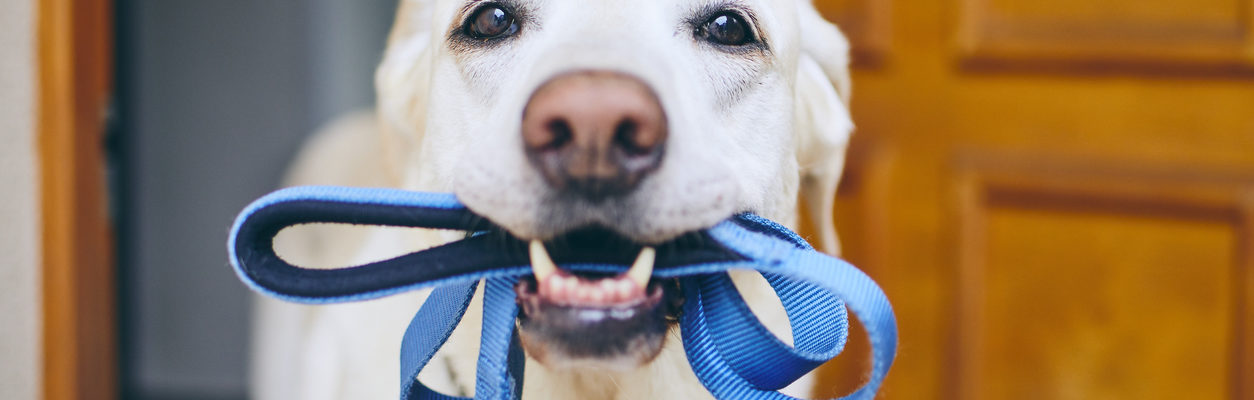 All Creatures Veterinary Center – Reasons to Take Your Dog On Longer Walks
