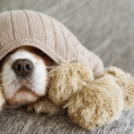 Top Three Ways to Care for a Sick Dog